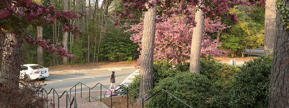 A masked student in the distance, looking down an outdoor brick stairway flanked by trees thick with purple blooms.